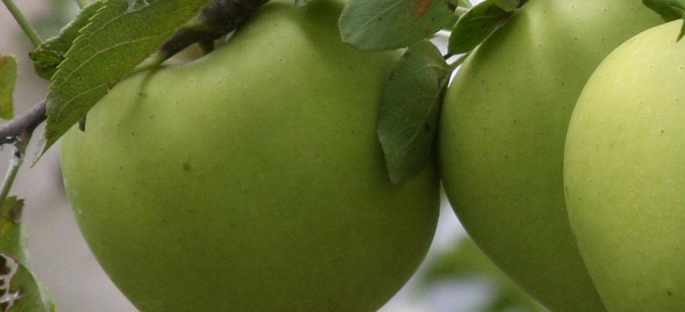 Manzana de Chihuahua
