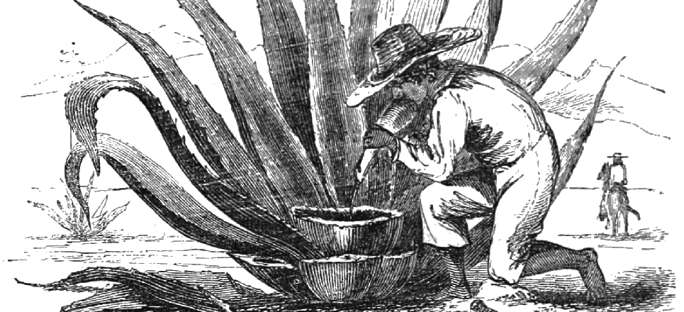 Pulque dibujo